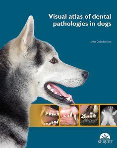 Visual atlas of dental pathologies in dogs