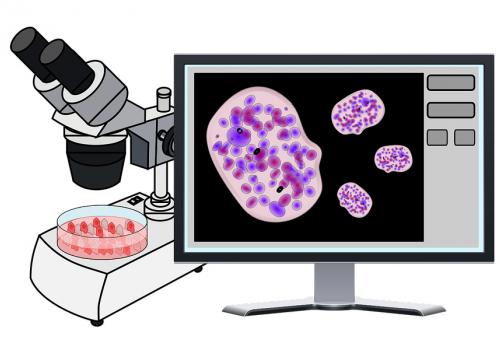 Laadukkaat ja luotettavat laboratorionäytteet: patologian laboratorio