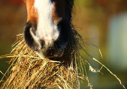 Hevosten aineenvaihdunnalliset sairaudet
