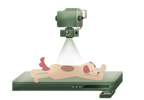 Pieneläinten röntgendiagnostiikka: Abdomen