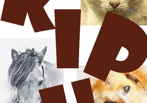 Koiran ja kissan nivelrikkokipu ja sen tunnistaminen